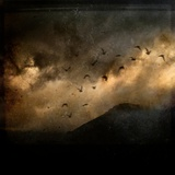 Birds Flying in a Dark Sky Photographic Print by Eudald Castells