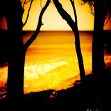 Silhouette of Trees Near a Beach Photographic Print by Mark James Gaylard
