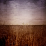 The Horizon Looking Through Long Grass at the Beach Photographic Print by Mark James Gaylard