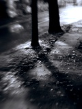 Distorted Tree Trunks on the Side of a Road by a Path in Sunlight Photographic Print by Rob Lambert