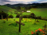 San Juan Batista Graveyard Photographic Print by Jody Miller