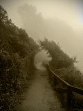 The Misty Path Photographic Print by Steven Boone