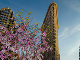 Flat Iron Building in the Spring, Manhattan, New York City Photographic Print by Sabine Jacobs