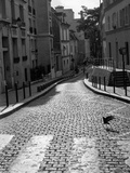 Pidgeon Crossing, Paris, France, 2010 Photographic Print by Paul Cooklin
