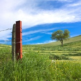 Fence and Tree in a Mowed Field, Limagne, Auvergne, France, Europe Photographic Print by Bernard Jaubert