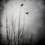 Two Bird Flying Near a Tree Photographic Print by Luis Beltran