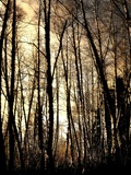 Winter Forest Light Photographic Print by Jody Miller