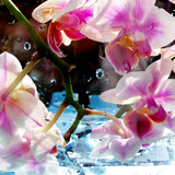 Flower Shower I Photographic Print by Alaya Gadeh