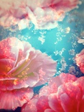 Begonias Dreams No 12 Photographic Print by Alaya Gadeh