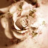 Romantic Rose Blush Photographic Print by Alaya Gadeh