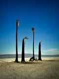 Four Burnt Palm Trees Beneath a Blue Sky with Mountains in the Distance Photographic Print by Jody Miller