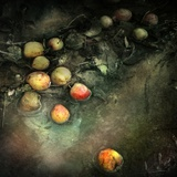 Windfalls Photographic Print by Marta Orlowska