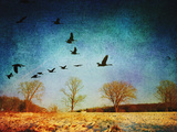 Canadian Geese and Early Winter Landscape Photographic Print by Sabine Jacobs