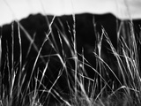 Sandia Mountain Grass Abstract Black and White Landscape, New Mexico Photographic Print by Kevin Lange