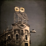 An Owl on a Roof in the City Fotoprint van Luis Beltran