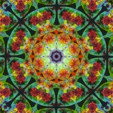 Mandala Whole Nature IV Photographic Print by Alaya Gadeh