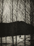 An Animal Walking in Snow Through Trees Photographic Print by Eudald Castells