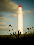 A White Light House with Small Flowers Photographic Print by Mark James Gaylard