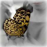 Butterfly Photographic Print by Katherine Sanderson