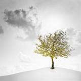 A Small Tree with Yellow Leaves on a White Background with Clouds Photographic Print by Luis Beltran