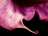 The Edge of a Pink Petal Photographic Print by  RedHeadPictures