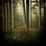 Trees in Mist at Dawn Photographic Print by David Baker