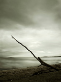 A Single Piece of Wood Washed Up on the Beach Photographic Print by Cristina Carra Caso
