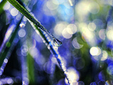 Dewy Grass Photographic Print by Sabine Jacobs