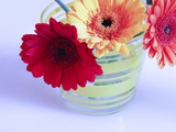 Three Gerbera Daisies Blue Photographic Print by Sabine Jacobs