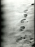 Footprints in a Sandy Beach Photographic Print by  RedHeadPictures