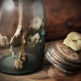 The Mason Jar Photographic Print by Janet Matthews