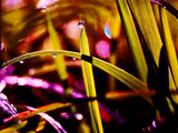 Dewy Grass with Bokeh Photographic Print by Sabine Jacobs