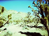 A Desert Scene with Cactus Plants Photographic Print by  RedHeadPictures