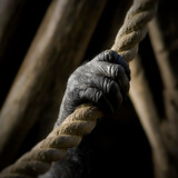 The Hand of an Ape Holding a Rope Photographic Print by Cristina Carra Caso