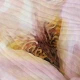 Iris Photographic Print by Katherine Sanderson