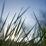 Blades Of Grass With Water Drops Against Sunlight Photographic Print by Bernard Jaubert