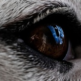 A Dogs Eye Photographic Print by Kimberley Ross