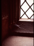 A Detail from a Tudor Window with Latice Lead Work Photographic Print by Leonora Saunders