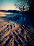 Winter Fields Photographic Print by Tim Kahane