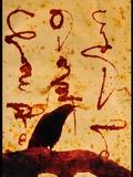 Corvus Corone Photographic Print by Katherine Sanderson