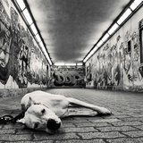 A Dog with Sad But Sweet Eyes in an Underground Walkway Covered in Graffiti Photographic Print by Kimberley Ross