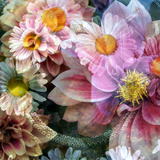 Romantic Dahlia Square II Photographic Print by Alaya Gadeh