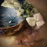 The Hydrangea Photographic Print by Janet Matthews
