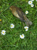 A Small Dead Bird Photographic Print by Tim Kahane