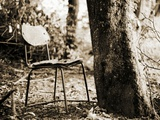 An Old Broken Chair Next to a Tree Photographic Print by Katrin Adam