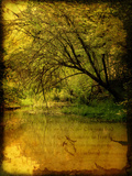 A Rural Scene with a Riverbank Photographic Print by Cristina Carra Caso