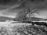 Bare Trees in a Rural Landscape Photographic Print by Rip Smith