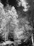 A Rural Scene with a River and Trees Photographic Print by Rip Smith