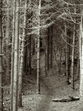 A Path through the Woods Photographic Print by Rip Smith