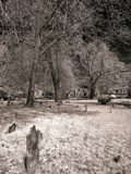 A Cemetery at Night Photographic Print by Rip Smith